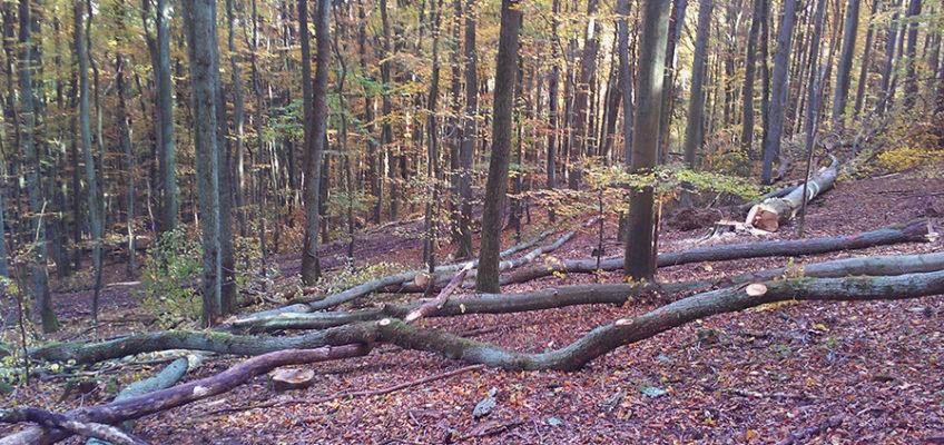 Durchforstung Brennholz Marburg